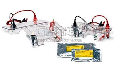Bio-rad 170-4482 Sub-Cell GT System 中型水平电泳系统 20个样