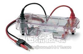 伯乐 Bio-rad 170-4486 Mini-Sub Cell GT System 小型水平电泳槽 15个样