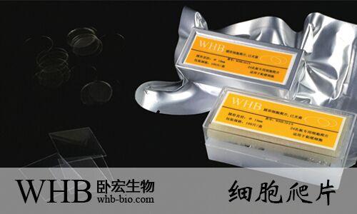 WHB品牌TC处理24孔圆形细胞爬片(直径14mm),灭菌