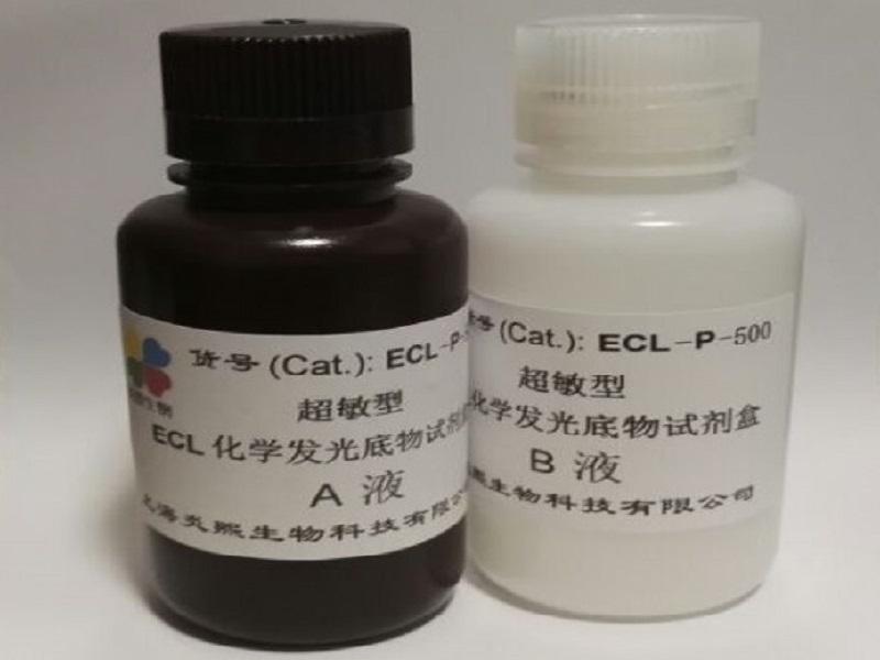 炎熙生物 超敏型 ECL化学发光底物试剂盒 100毫升