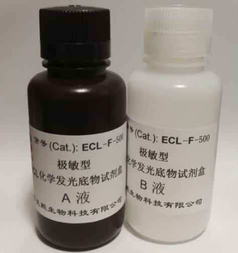 炎熙生物 极敏型 ECL化学发光底物试剂盒 100毫升