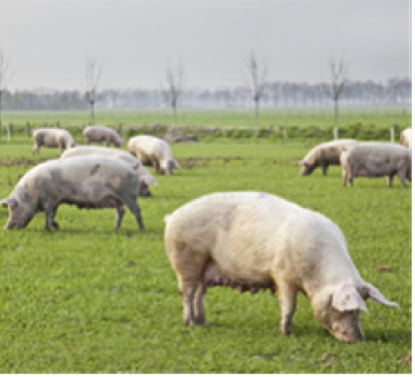 非洲猪瘟抗体检测试剂盒(96T*5)