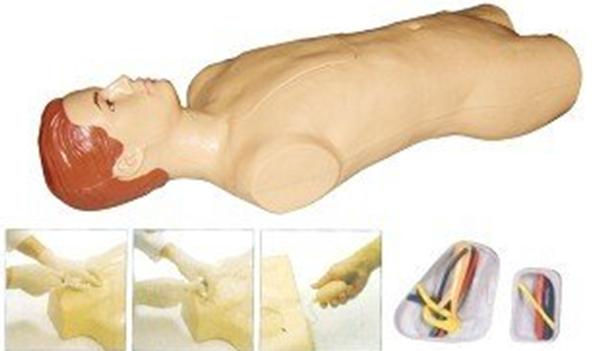 GD/L69A中心静脉穿刺注射躯干模型 (可模拟颈动脉、股动脉的过博动,确定静脉位置)