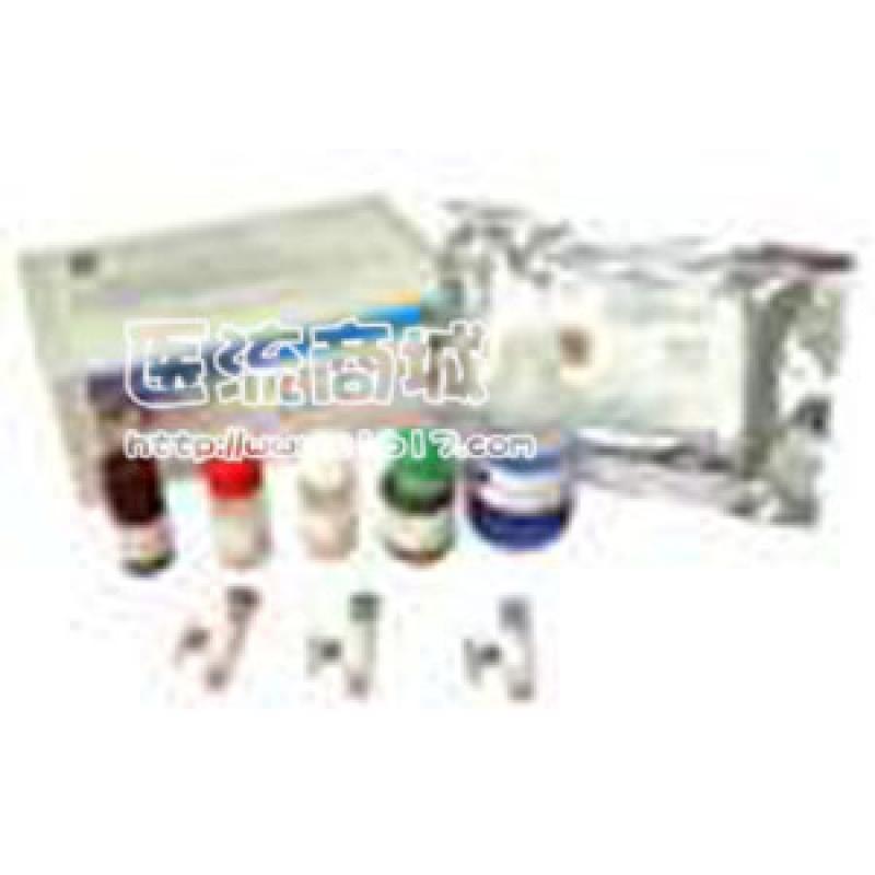 XRCC3 (H-300)抗体