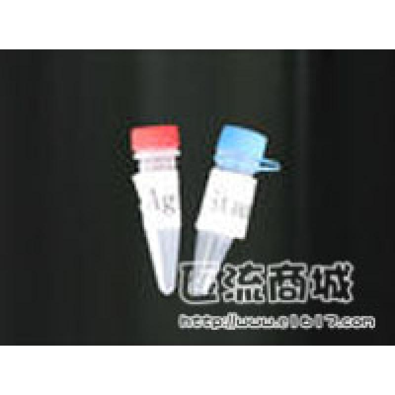XBP-1 (F-4)抗体