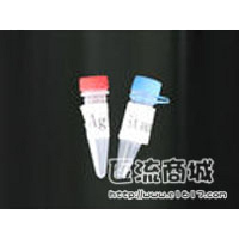 XBP-1 (M-186)抗体