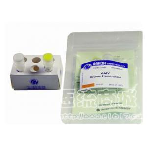 AMV反转录酶(BiPec原装)