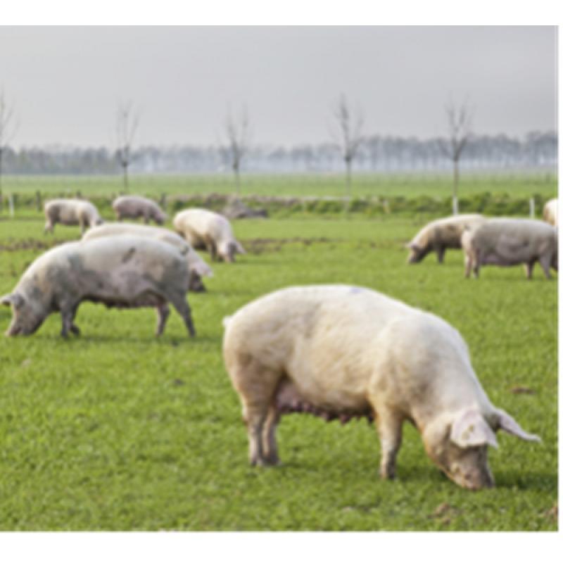 猪传染性胸膜肺炎 - 抗体检测ELISA:Ceditest APP(96T*2)