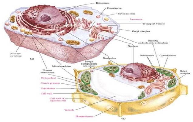细胞亚显微结构模型