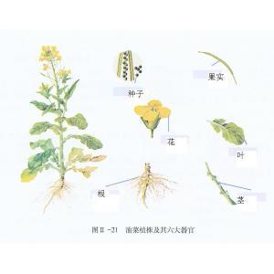 植物结构模