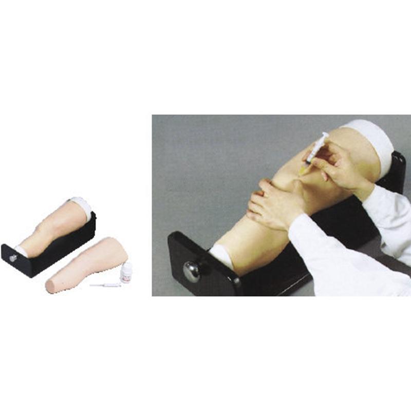 SBK/Y59电子膝关节腔内注射模型 (采用进口高分子材料,具有完整的膝关节解剖结构)