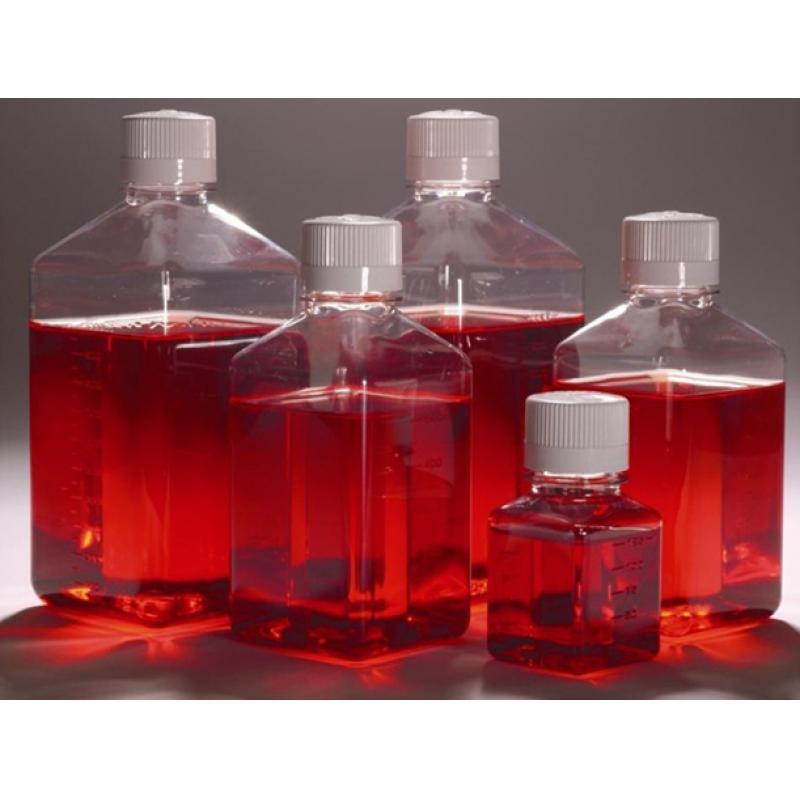 COLO-320人结肠腺癌细胞
