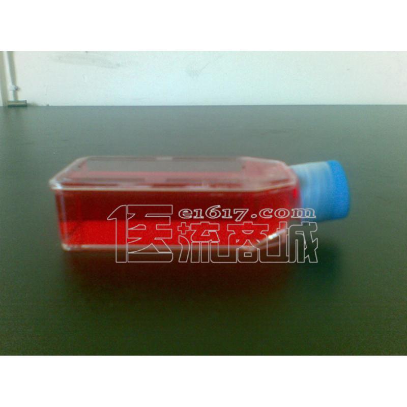 TF-1 人血液白血病细胞ATCC CRL-2003