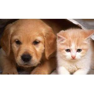 犬和猫排卵时间金标检测