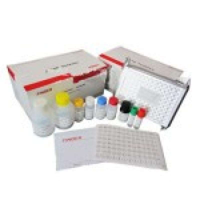 猪流行性腹泻病毒抗体检测试剂盒