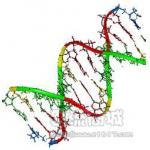 全长DNA