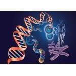 常规DNA