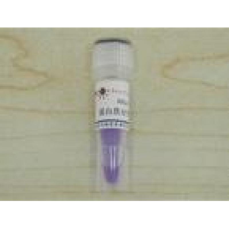Prestained Protein Marker, (Premixed)