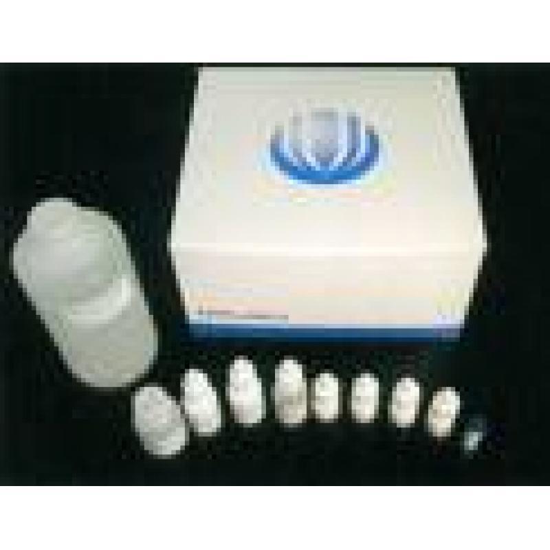 中性蛋白酶|分散酶(进口原装)