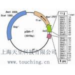 pcDNA4/HisMax B