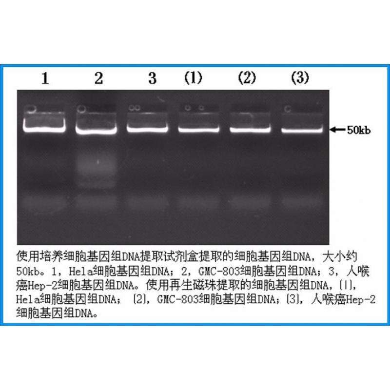 培养细胞基因组DNA提取试剂盒