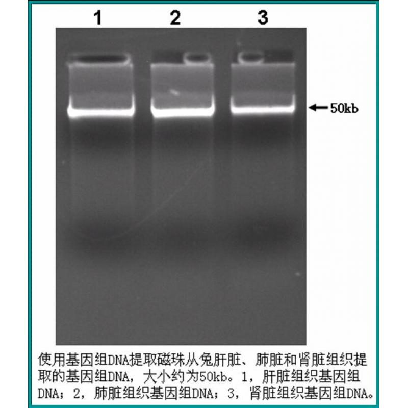 动物组织基因组DNA提取试剂盒