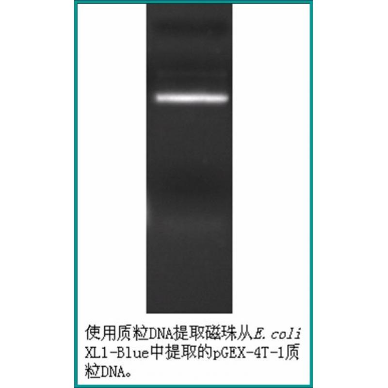 质粒DNA提取试剂盒