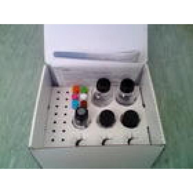 BCA Protein Assay Kit