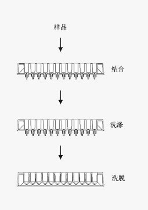 96高通量抗体纯化试剂盒 (4x96次)