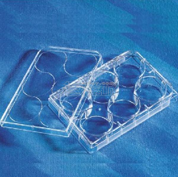 Corning康宁 6孔培养板 透明 TC表面 PS材质 带