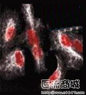 TdT加尾法DNA探针标记试剂盒(生物素)