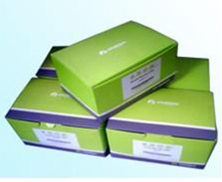Omega 质粒小量提取试剂盒 50次